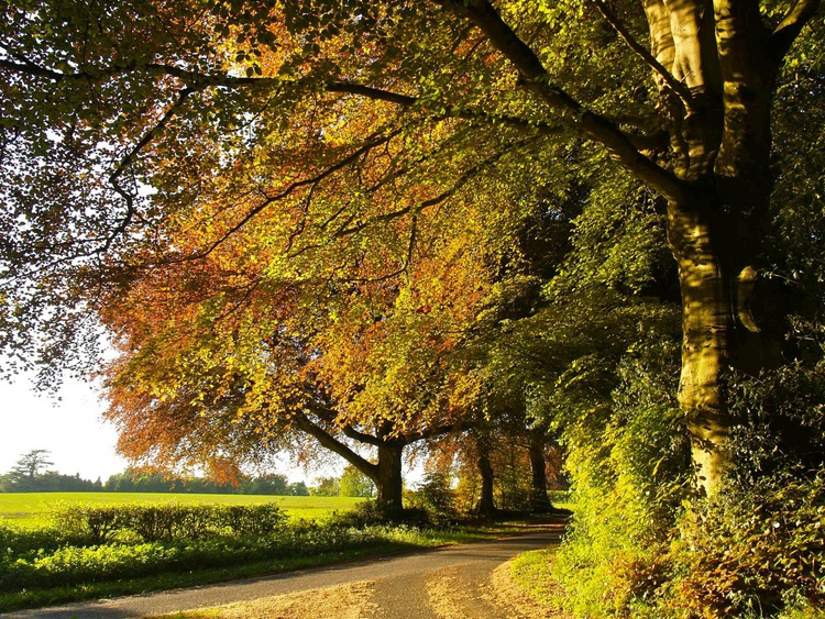 Country Lane In Rural Hampshire - Image 0