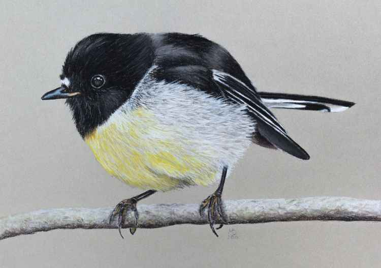"Original pastel drawing ""Tomtit"" -"