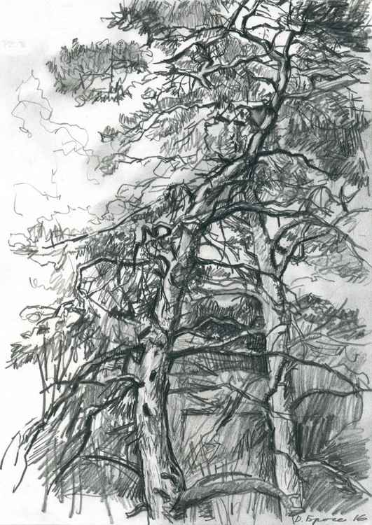 Pinetrees -