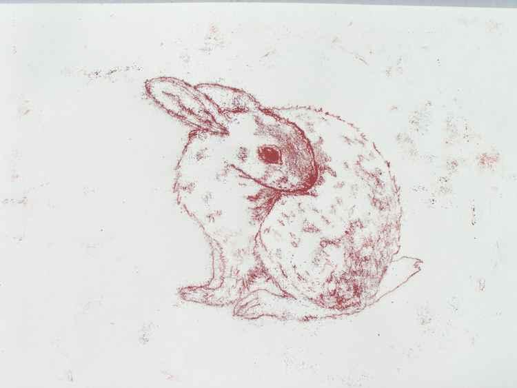 Curled Rabbit