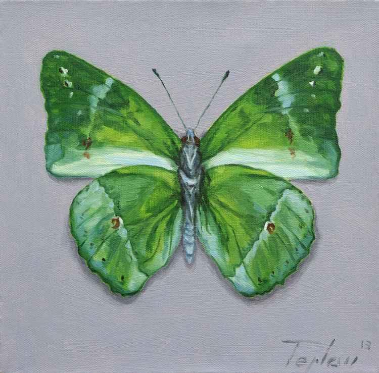 Butterfly III -