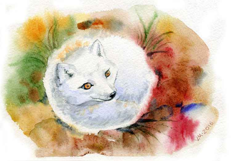 Fox2 -