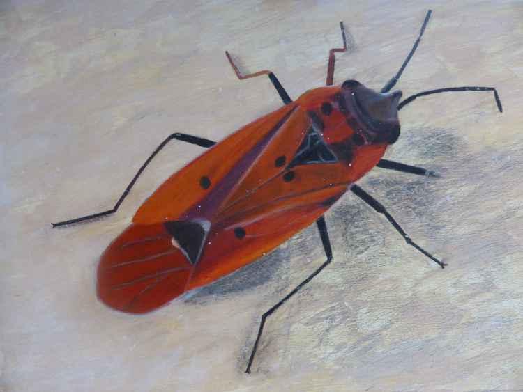 True Bug -