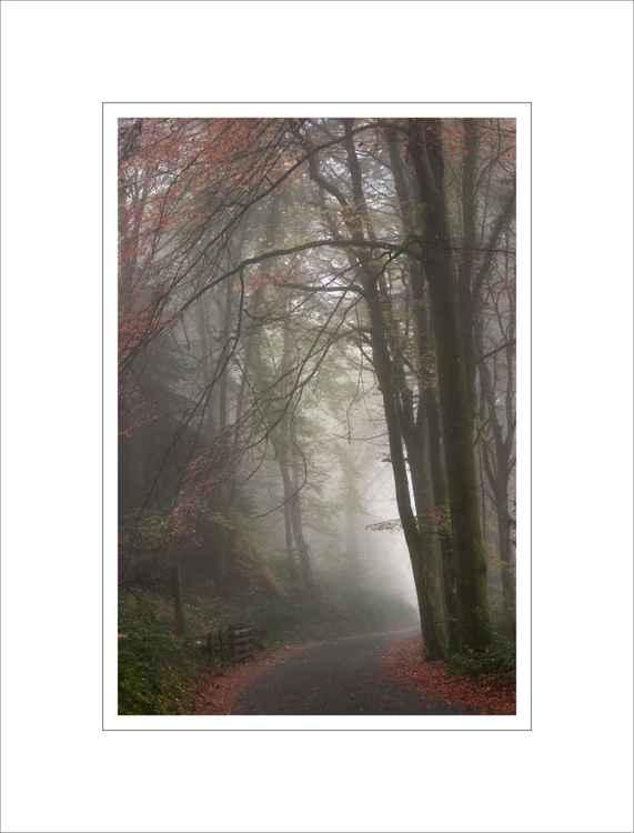 Vyrnwy Fog