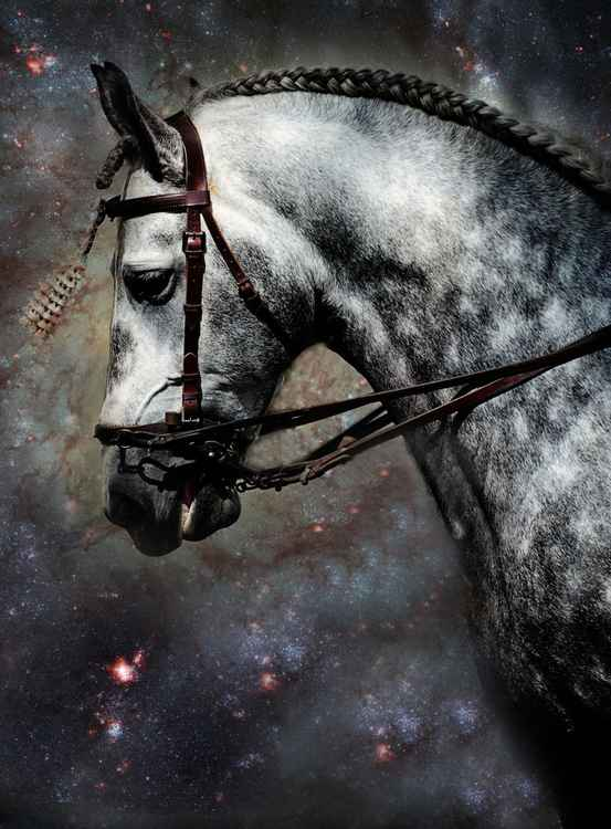 The Horse Among the Stars (Ltd Edition of only 25 Fine Art Giclee Prints from an original photograph)