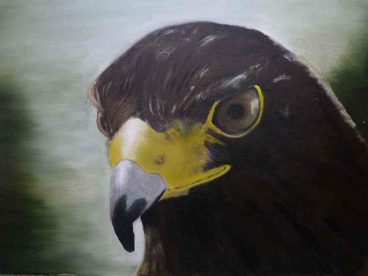 Eagle Eyed -