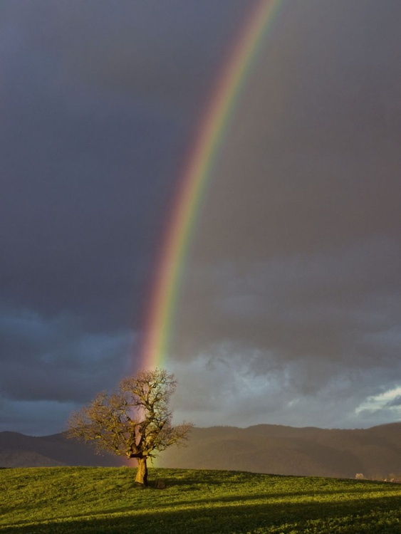Where the rainbow ends - Image 0