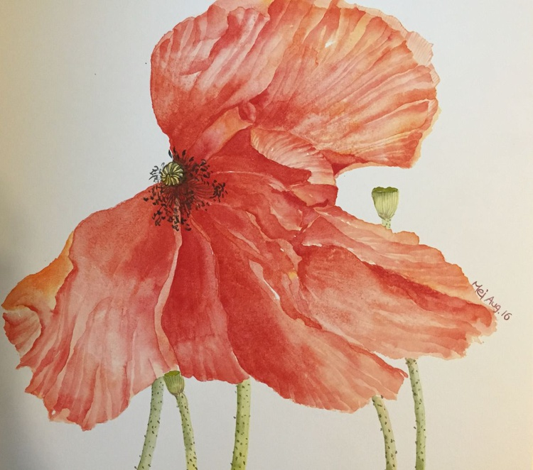 Red Poppie - Image 0