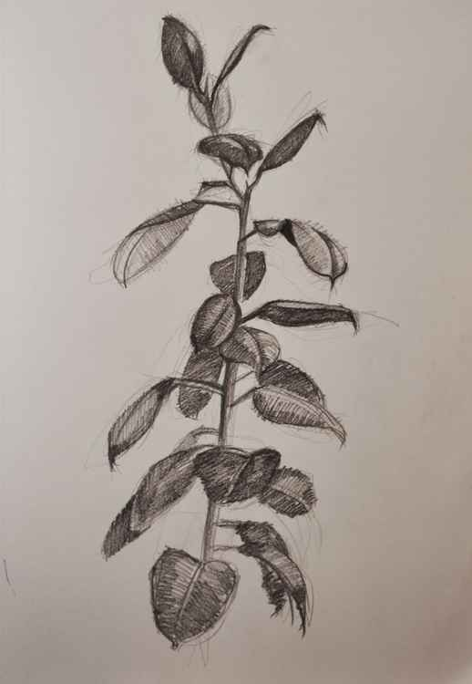 DRAWING OF A PLANT  2 -