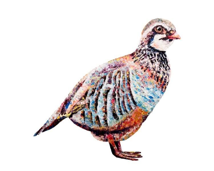Partridge - Image 0