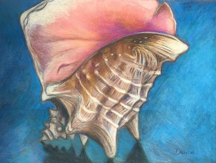 Queen Conch Shell - Image 0