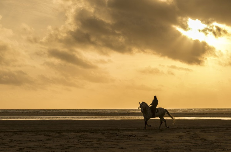 RIDER IN SILHOUETTE - Image 0