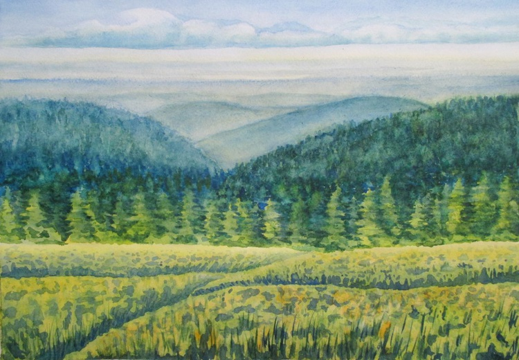 Emerald green spruces - Image 0