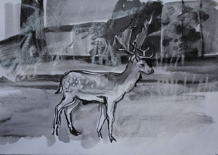 Young stag in parkland (small) - Image 0