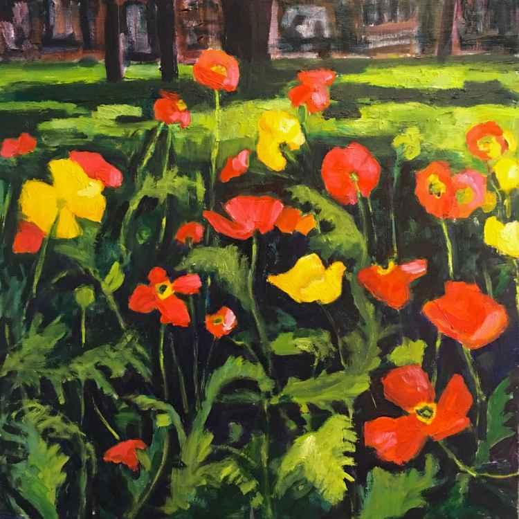 Poppies in the Garden -
