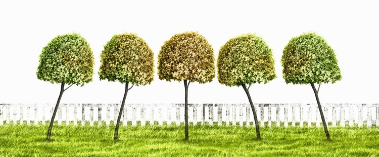 Trees In Harmony (Ltd Edition of only 20 Fine Art Giclee Prints from original artwork.) - Image 0