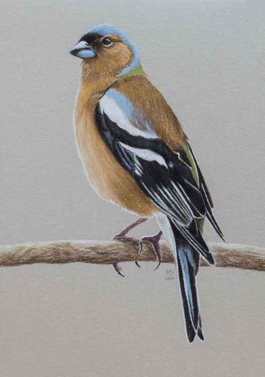 "Original pastel drawing ""Chaffinch"" -"