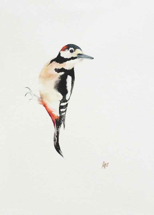 Great Spotted Woodpecker (Dendrocopos major) - Image 0