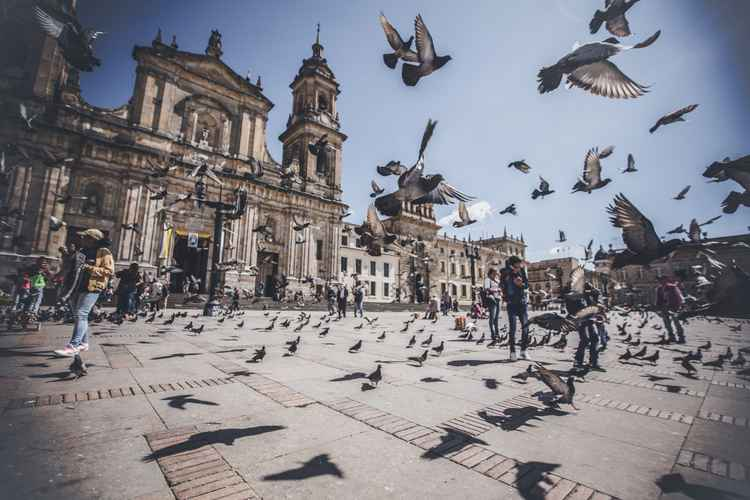 birds of bogota -
