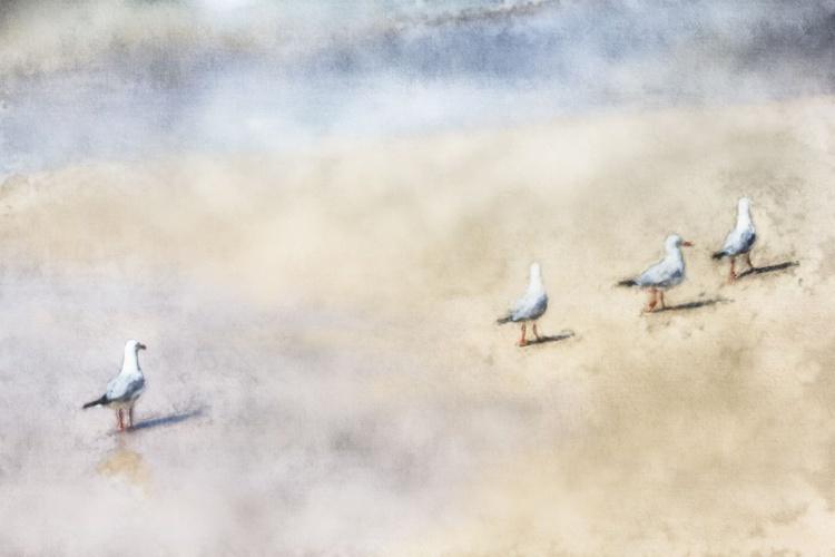 Beach Gulls - Image 0