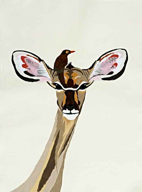 KUDU WITH OX PECKER -