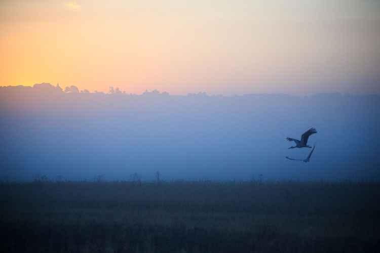 Dawning -