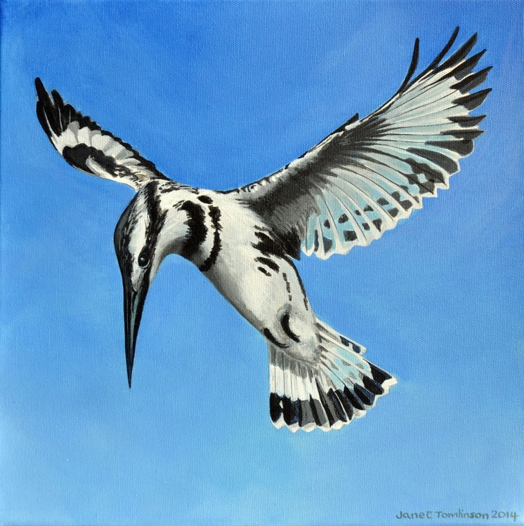 Pied kingfisher hovering - Image 0