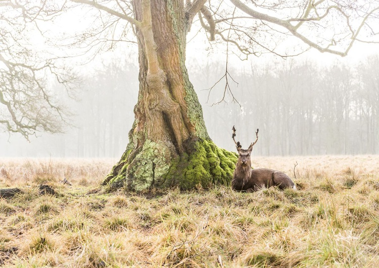 THE STAG 2 - Image 0