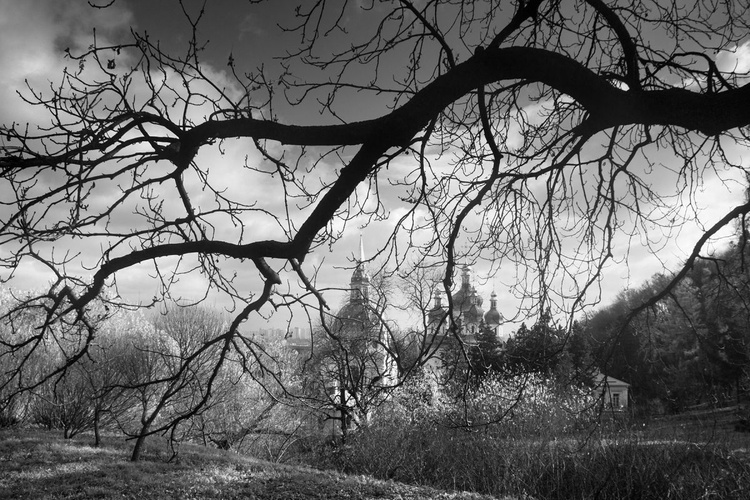 The branches of an old tree - Image 0