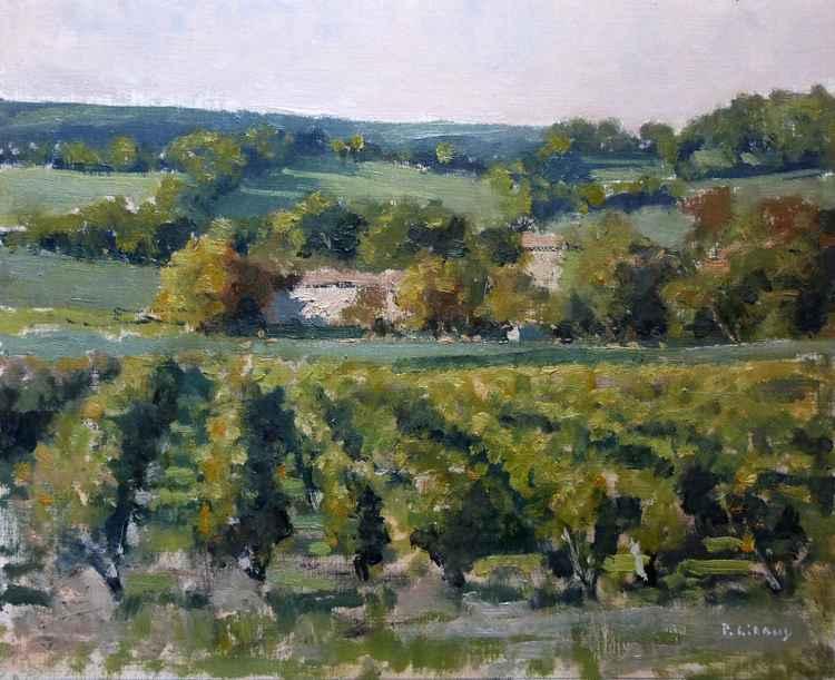 Vineyards near Château Neuf du Pape