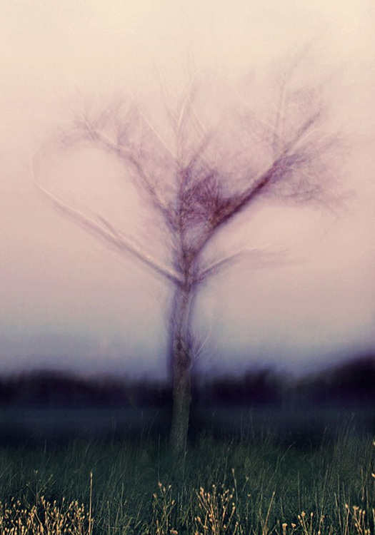 Misty dawn III - Image 0