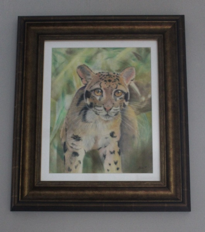 Clouded Leopard, pastels on velour, mounted and framed. - Image 0