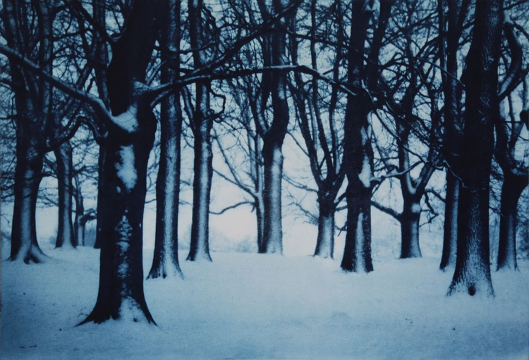 In the Deep Dark Wood - Image 0