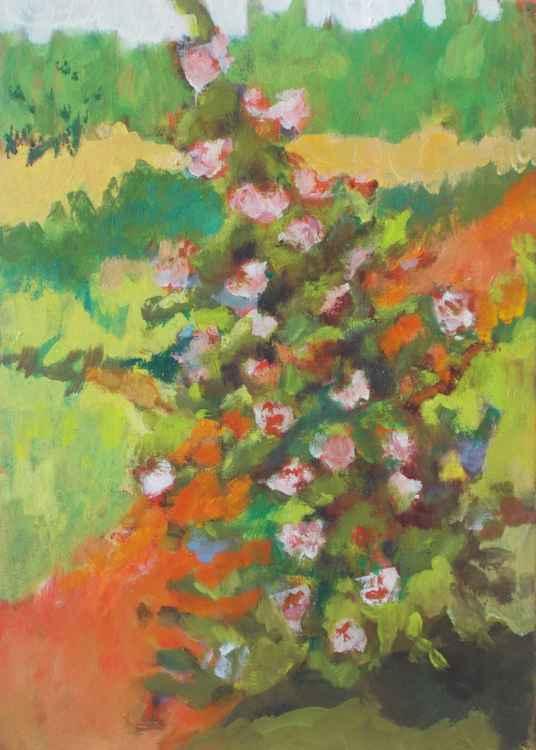 Rose Bush by Road
