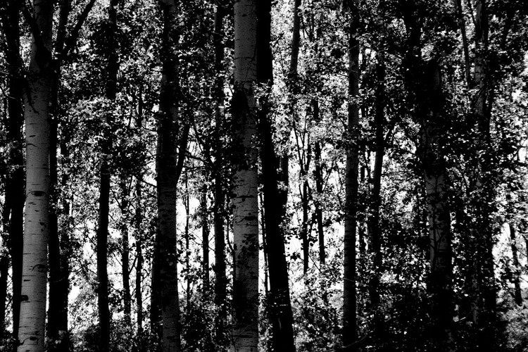 the Marshes trees - Image 0