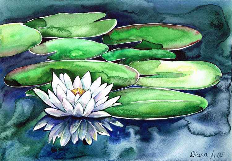 White Waterlily -