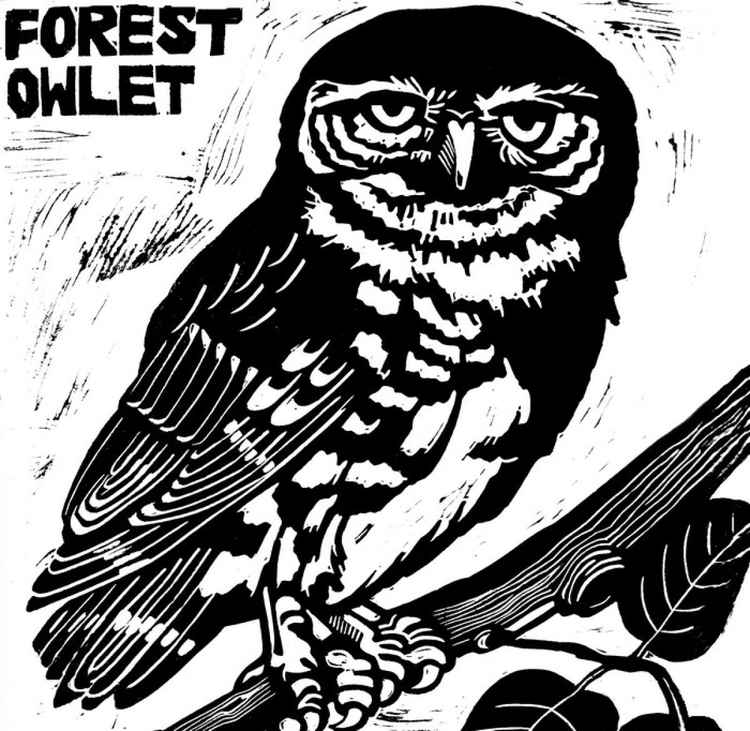 Forest Owlet -