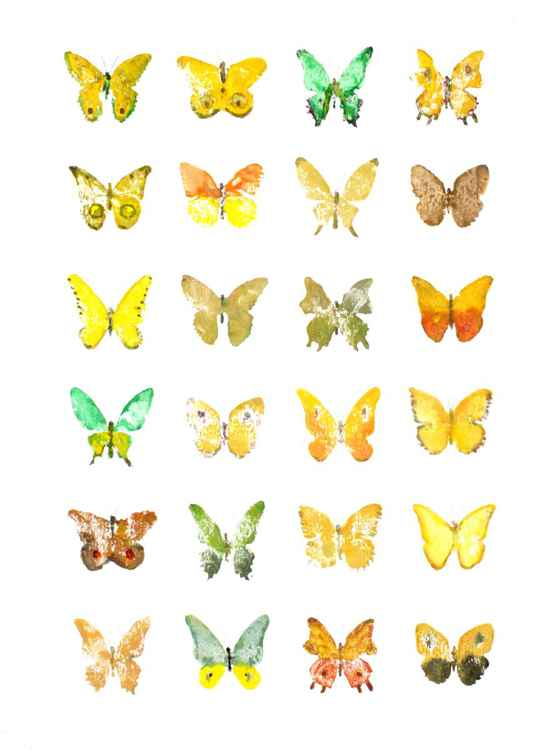 Twenty-four Butterflies 3040YO1
