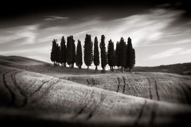 Cypress Grove, Tuscany, Italy - Image 0