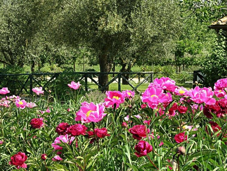 Il giardino delle peonie - Image 0