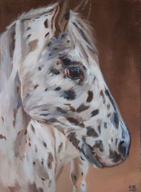Éclair - Appaloosa horse