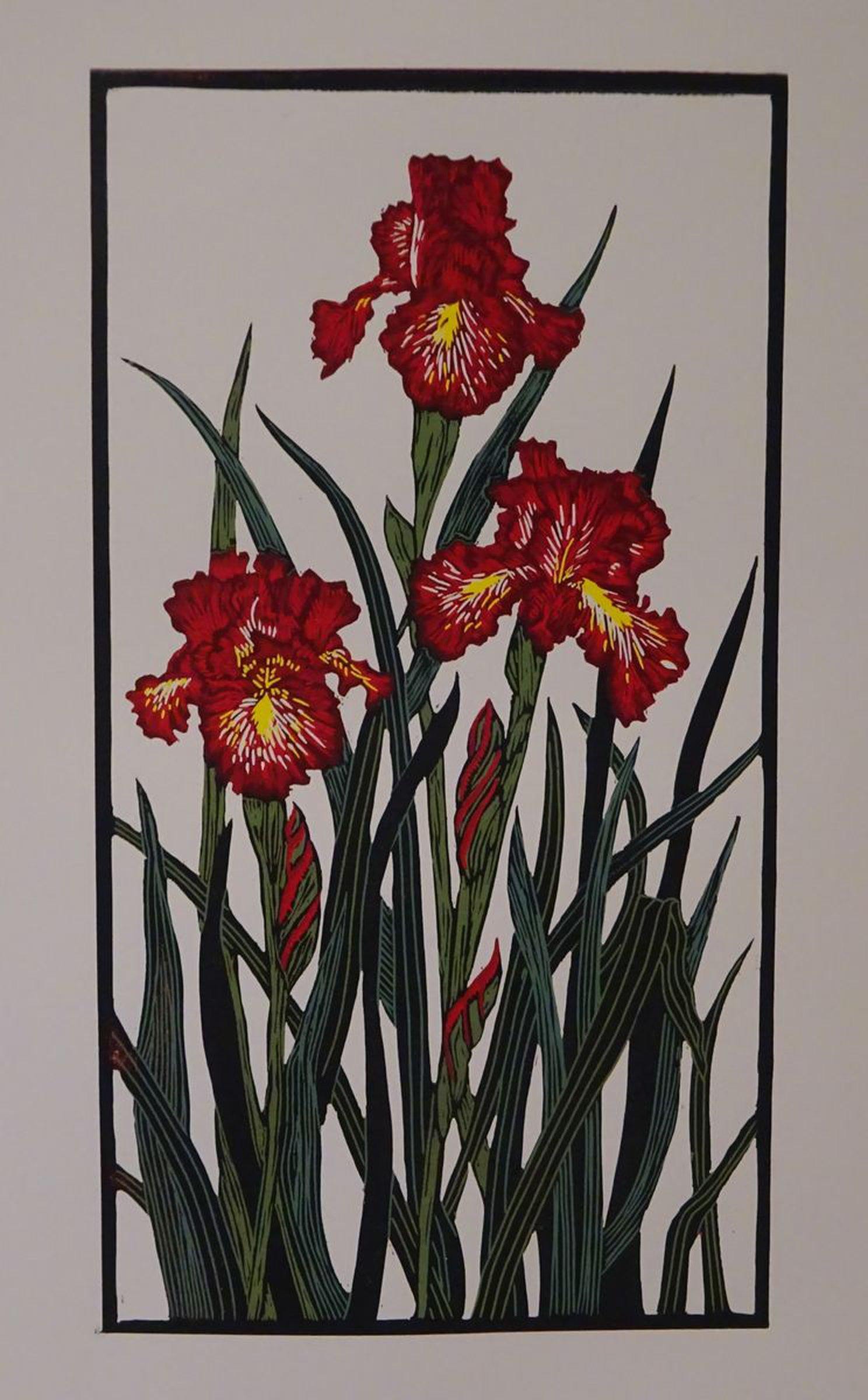 Crimson Iris flowers by Margaret Mallows | Artfinder