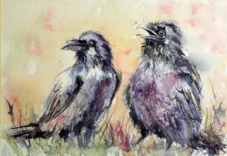 Ravens -