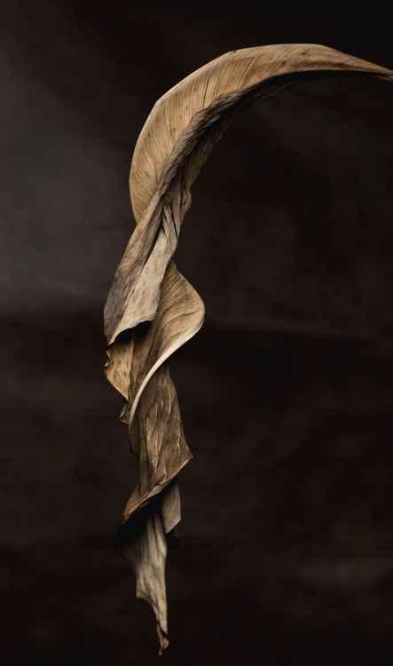 Leaf #5 -