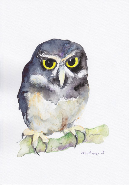 Spectacled Owl - Image 0