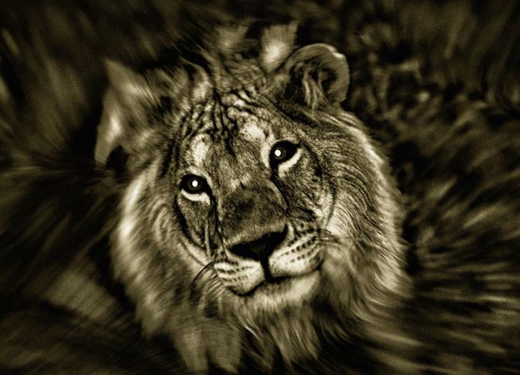 Jungle King - Image 0