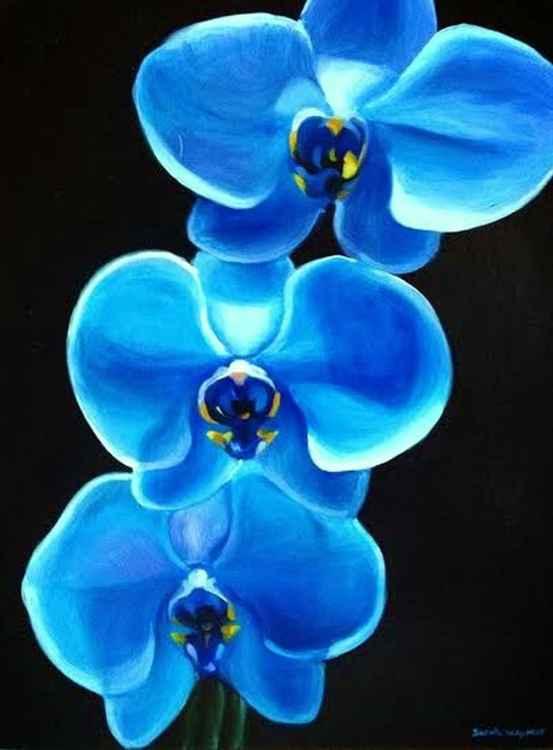 Blue Orchids -