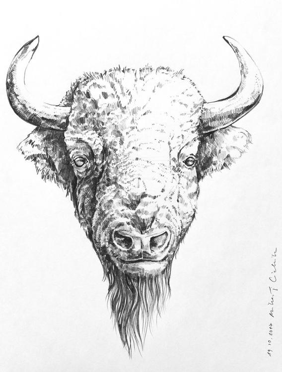 Bison - Image 0