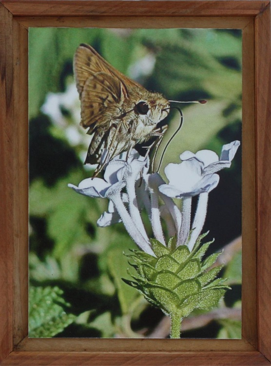 Butterfly & small White Flower Spirit - Image 0