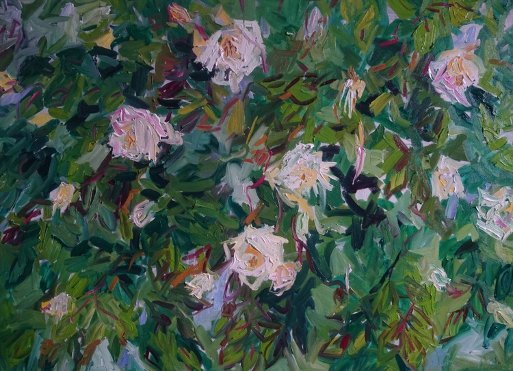 Hedge of roses - Image 0